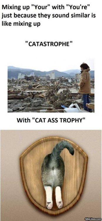 Cat+ass+trophy_df7feb_4738948.jpg