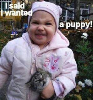 347d115a71404b1b3858295db5c2fd01--hate-cats-puppys.jpg