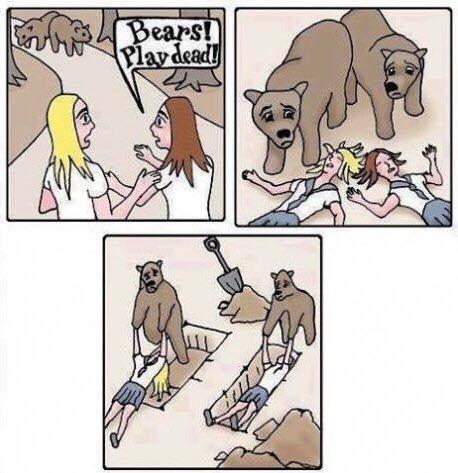 Bear, Play dead.jpg