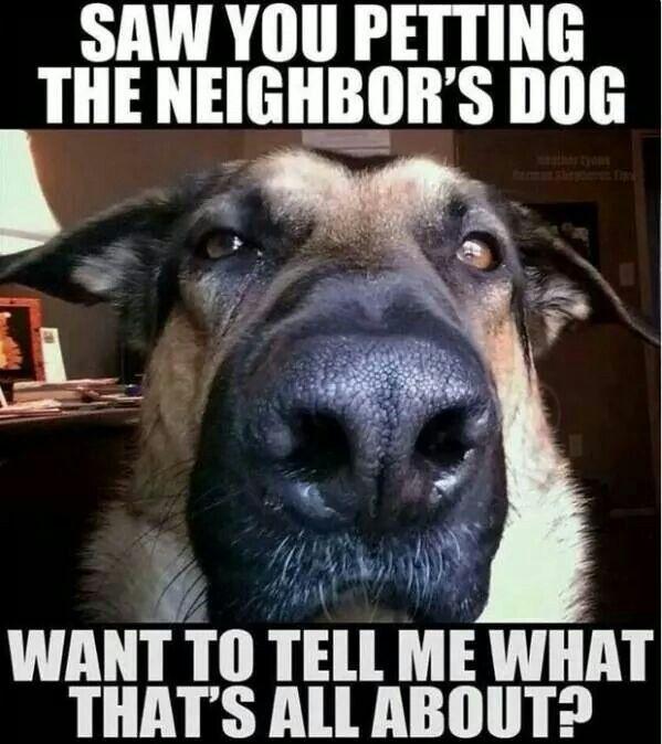 beac365321eb86a5e7ad60cebc801cf6--animal-quotes-animal-humor.jpg