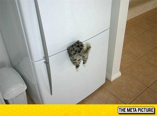 cool-cat-refrigerator-magnet.jpg.972b152924d91a4d607db7e6daf07388.jpg