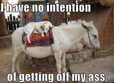 dd494d9e4a2122991d441e52638b4e52--donkeys-animal-funnies.jpg