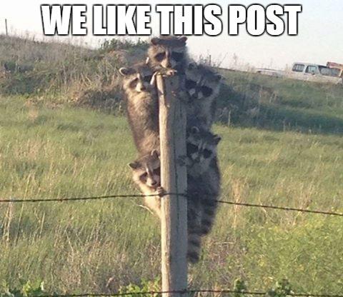 We Likehis Post.png