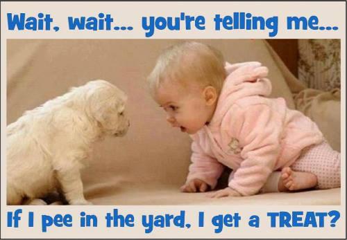 Pee in yard.jpg