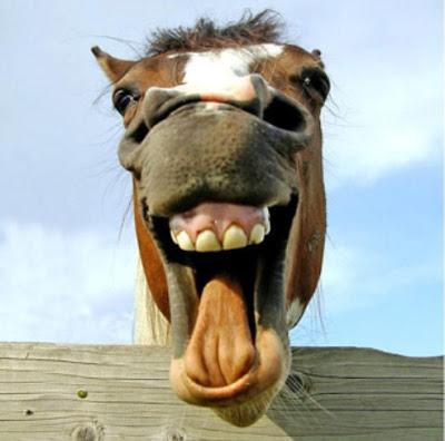 5ace3a8fe4ae5_Horselaughing.jpg.3490441405043aeaaa166ba35d87a5a3.jpg