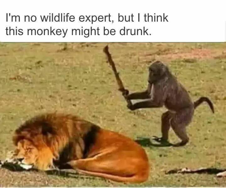Lion and monkey.jpg