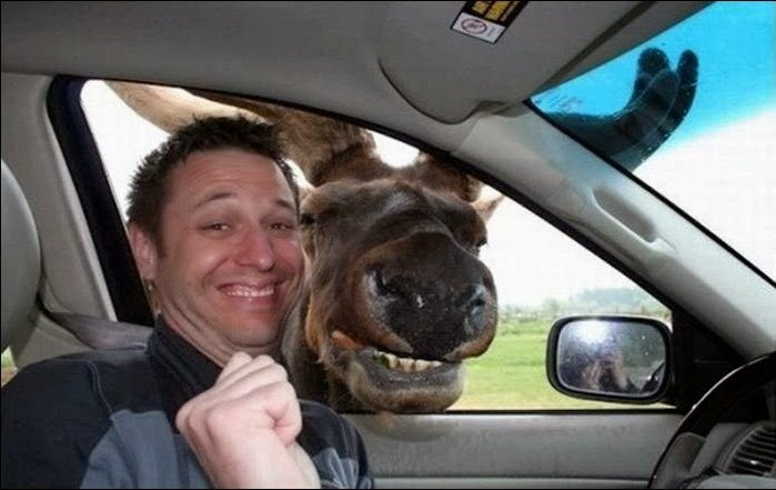 Moose in car Selfy.jpg