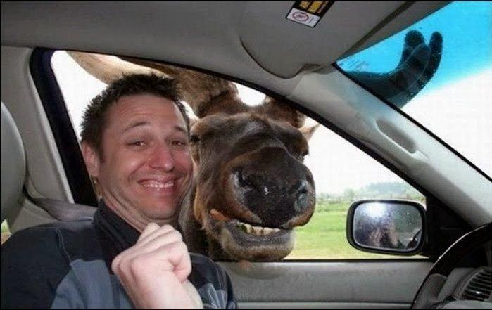 Moose in car Selfy.jpg