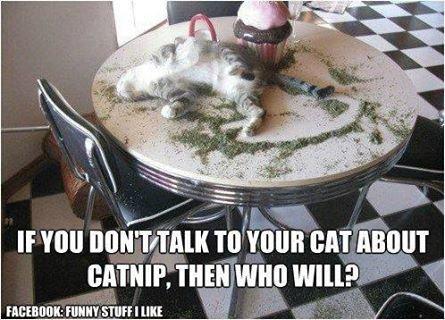 catnip_zps033d9e01.jpg