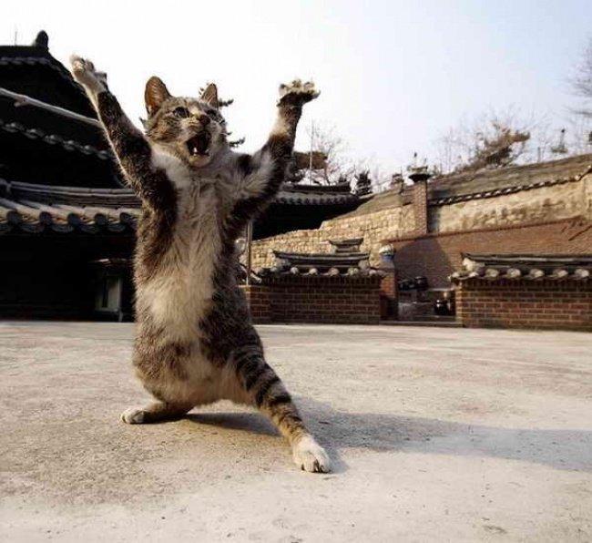 cat martial.jpg