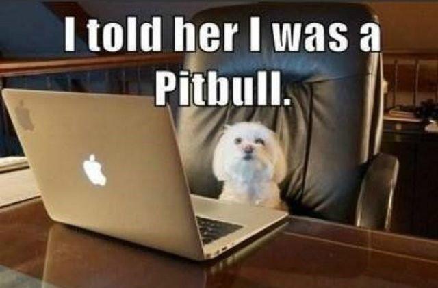 pitbull.jpg.d997a7627b84fe253e32e0df2592ab97.jpg
