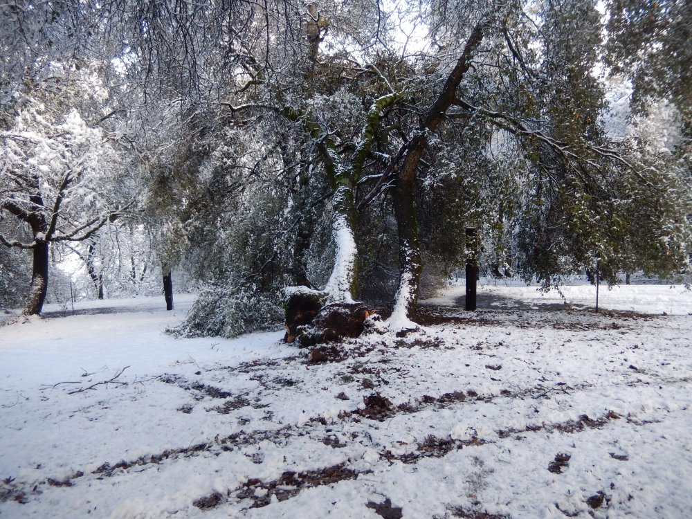 February 2019 2 Tree Over Driveway.jpg