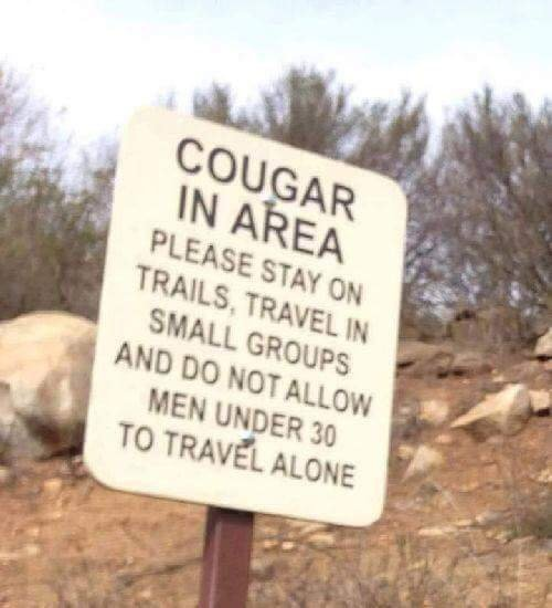cougar warning.jpg