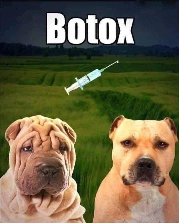 Botox.thumb.jpg.95e5e6a0da1866138381bd36587812e1.jpg