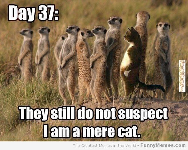 mere_cat.jpg.c262fa8b67477fd9f96cfc56ce5d4eb5.jpg