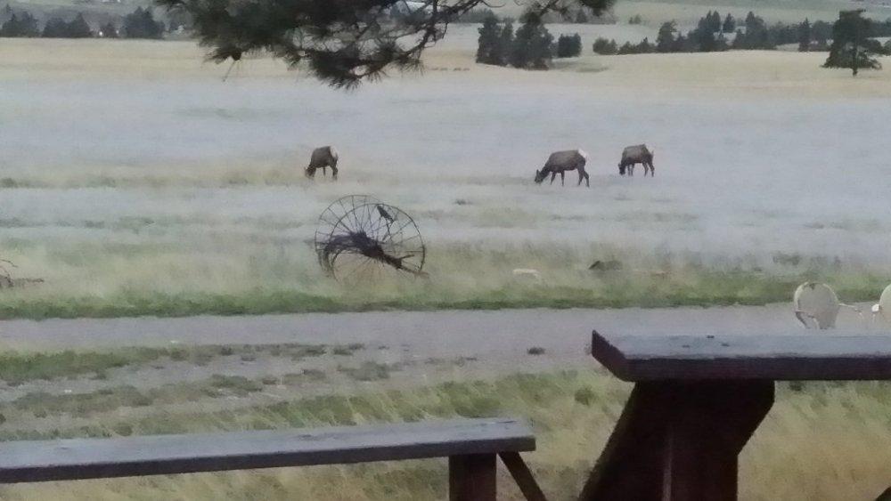 Elk_5-10-19.jpg