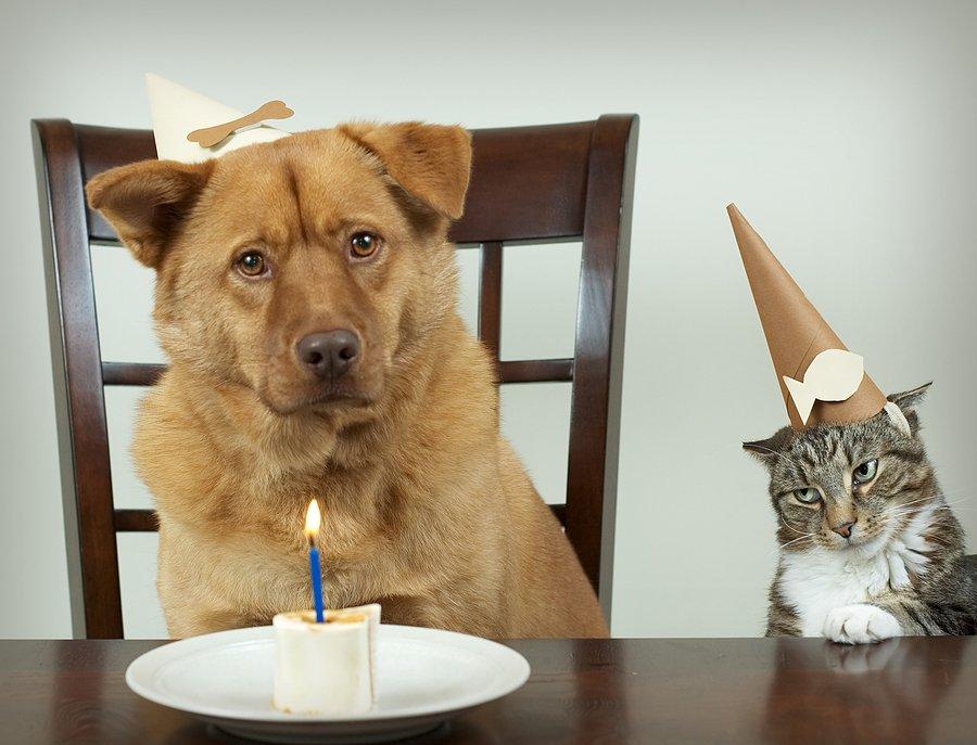bigstock_Pet_Birthday_Party_10928241.jpg.77904ee3bf18e52ad350e9513f187a58.jpg