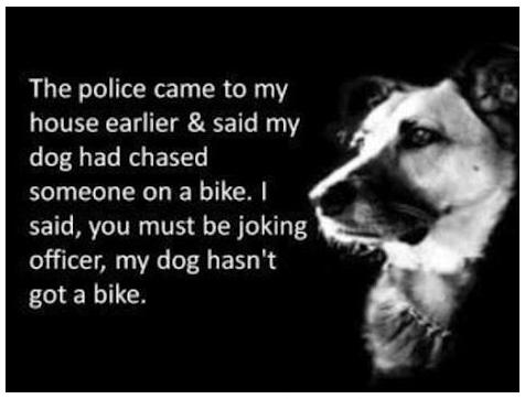 dogbike.png