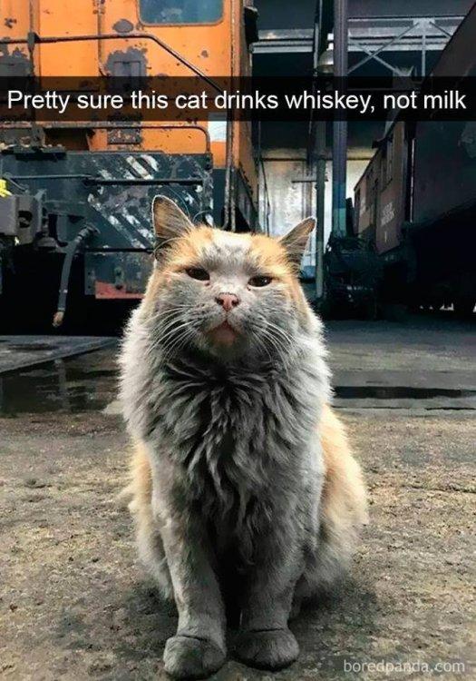 whiskey cat.jpg