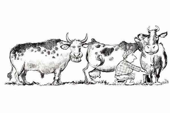 bull.jpg.7abb5499339df29d43d8b1ac6397b951.jpg