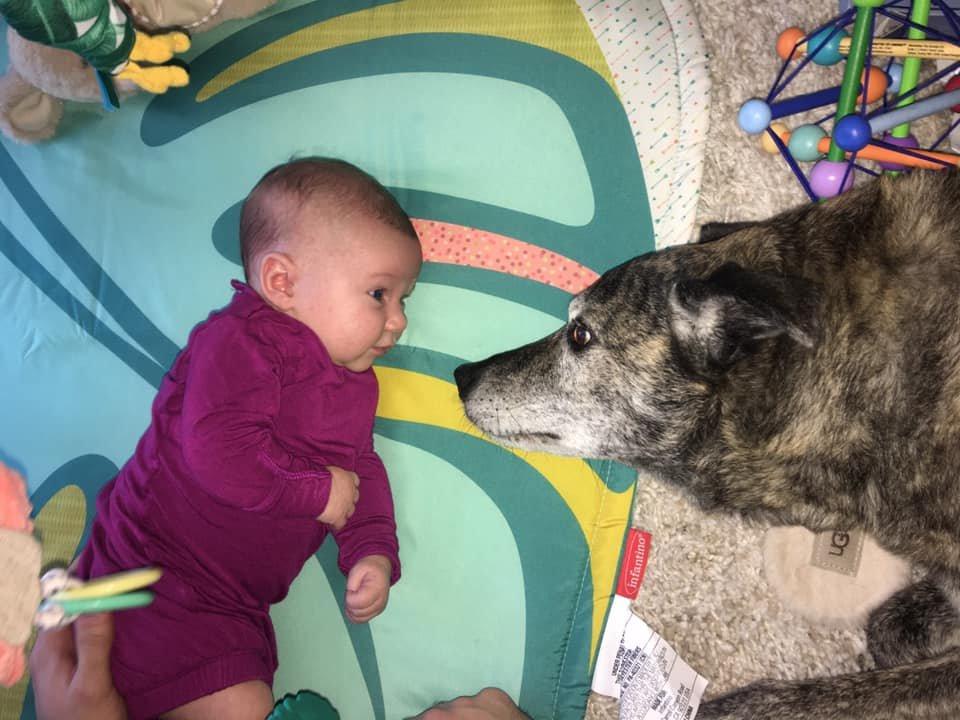 dog and birito.jpg