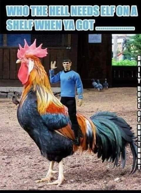 spockonacock.jpg