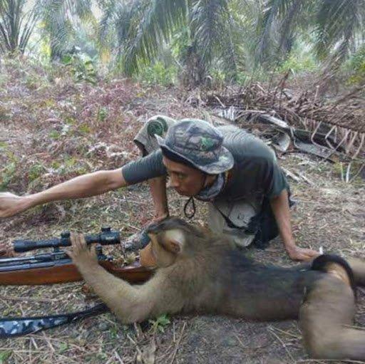 monkey sniper.jpg