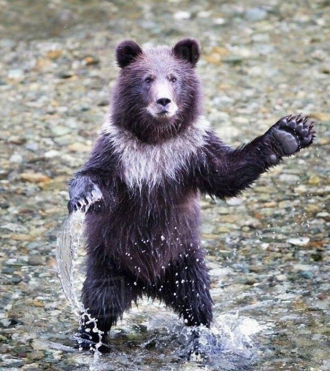 BearAerms.jpg