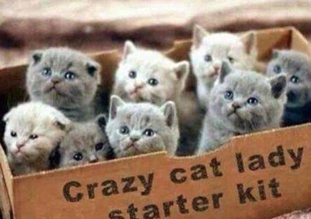 catladystarterpack.jpg