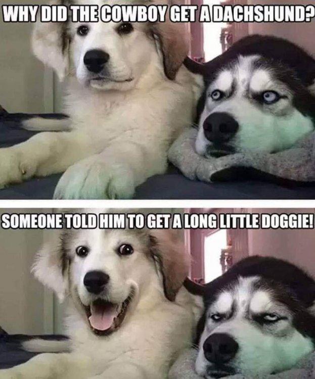 getalonglittledoggie.jpg