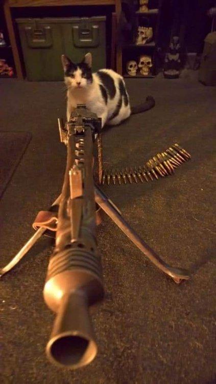 cat w mg42.jpg