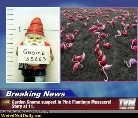 Gnome suspect.jpg