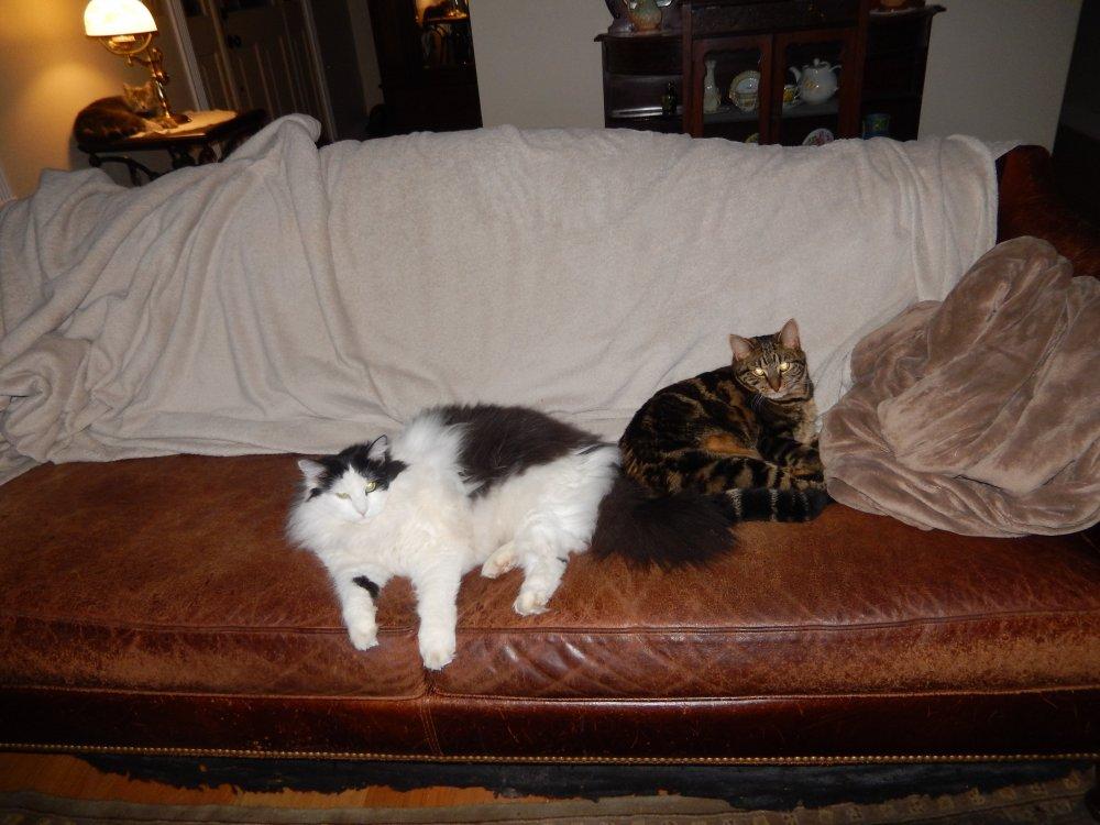 Gigi,Rita and Ziggy-02032020.JPG