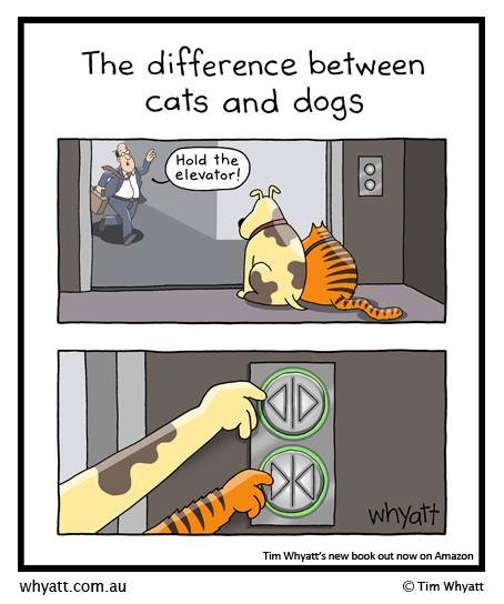 cats and dogs differences.jpg