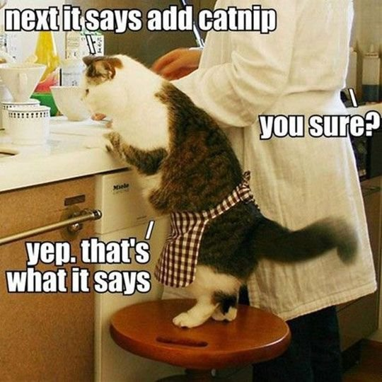 Cat Cooking with catnip.jpg