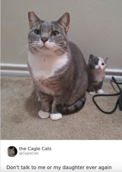 cats.jpg.3e802f1c7d261fedb88166fc06c600fd.jpg