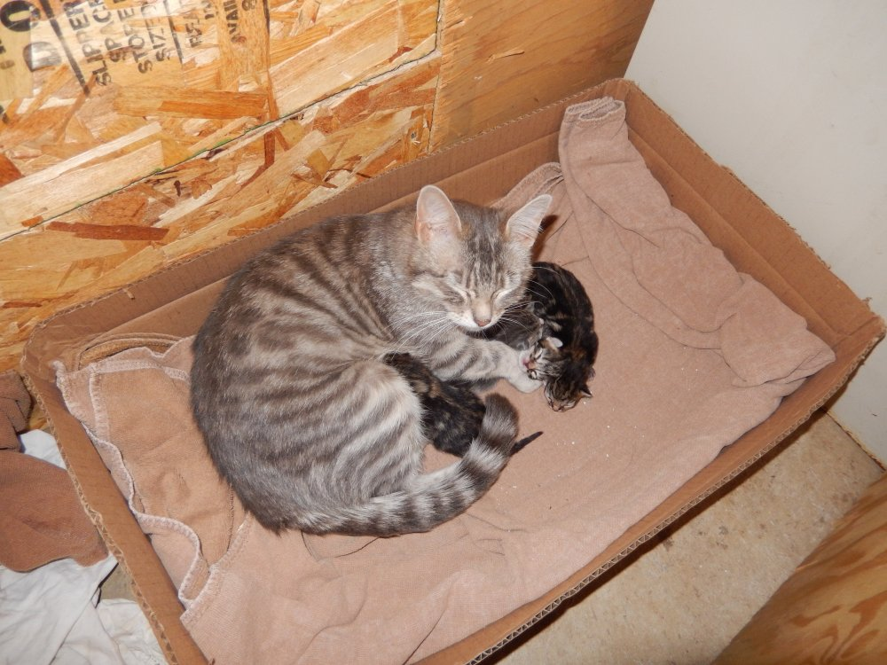 Tablet and Babies 2 Day Old 1.JPG