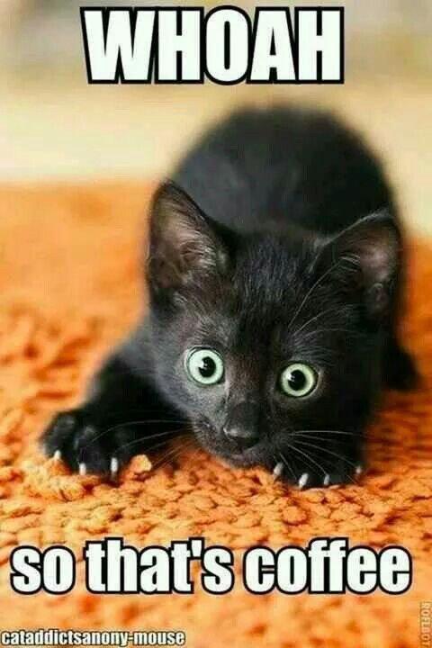 Cat WHOA so thats coffee.jpg