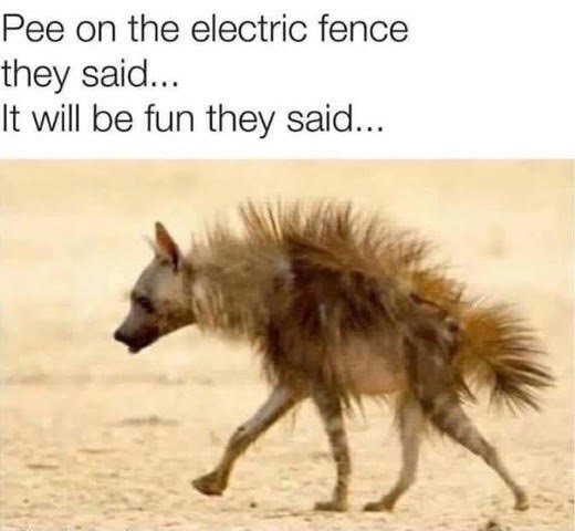 Hyena and electric fence.jpg