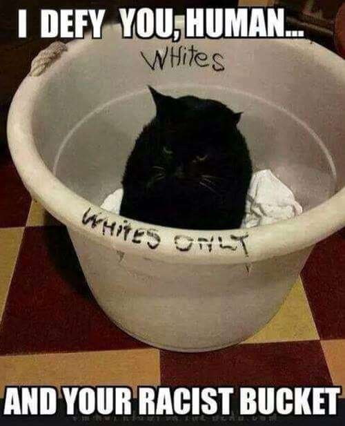 Cat in White bucketEDtEV3P.jpg