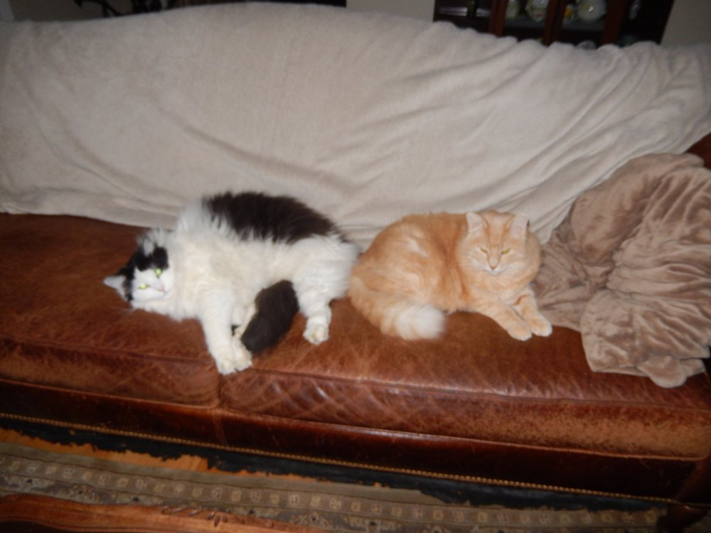 march2020 Ziggy and Francie on Sofa.JPG