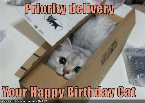 birthdaycat.jpg