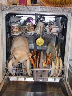 dog.dishwasher.jpg