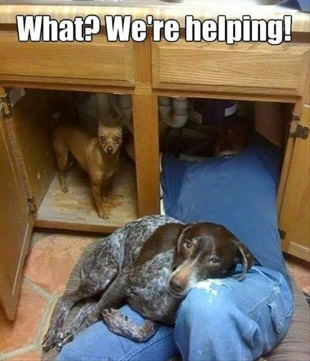dogplumbers.jpg