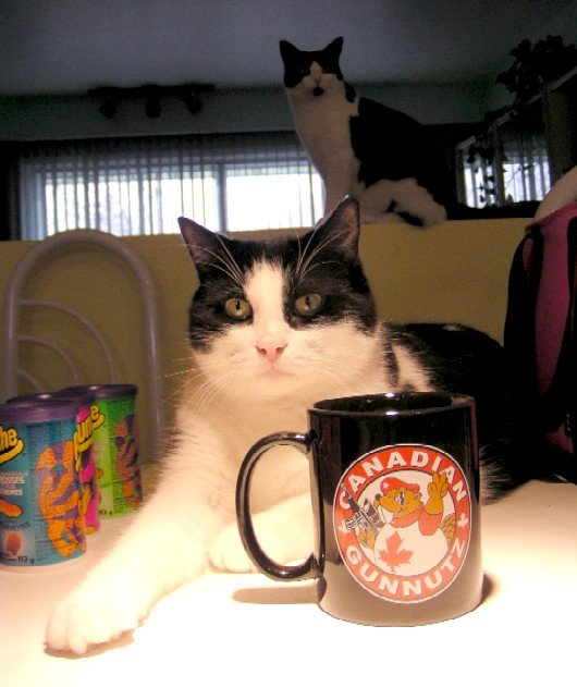 CGN Coffe cup cat P1010276_3.jpg