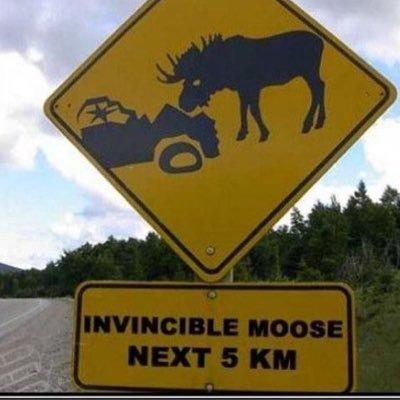 moose.jpg.7e1bd39a5dab132cefde6b093c88d981.jpg