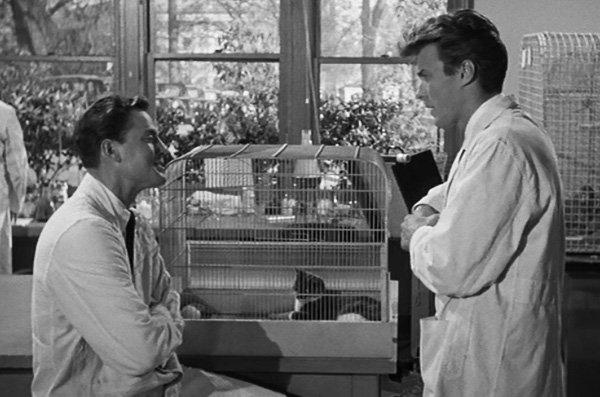revenge-of-the-creature-1955-first-clint-eastwood-movie-review.jpg.ea3f5b961e740072547f2076eaca9e5c.jpg