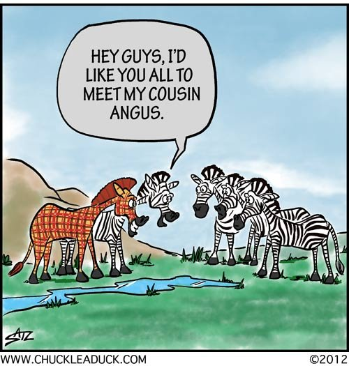 Cartoon, Scots Zebra.jpg