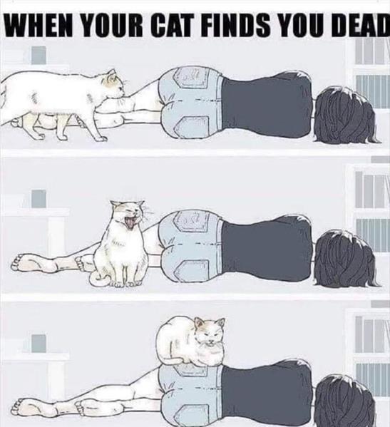 cat owner.jpg