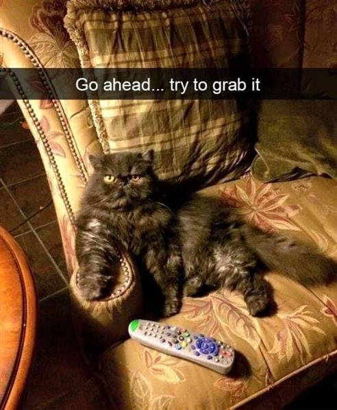 cat remote.jpg